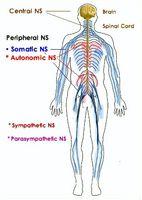 Hvordan identifisere dysautonomia