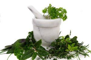 Herbal Migrene Hodepine Forebygging