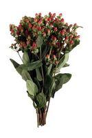 Planter som Antidepressiva er laget av