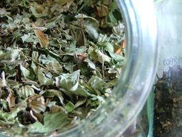 Grønn te Fordeler for leveren