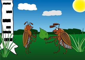 Hvordan du kan overvinne frykt for kakerlakker