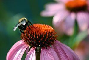 Spesifikk urtete til hjelp i Sinus infeksjoner