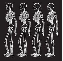 bein i menneskekroppen