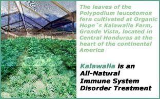 Hva er Kalawalla?