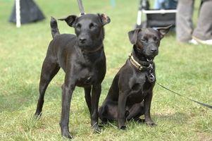 Tjeneste Dogs for barn med autisme