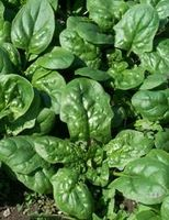 Hvordan virker Eating Spinat forbedre synet?