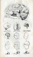 Hva er årsakene til betennelse i frontallappen i hjernen?