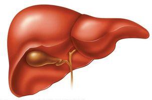 Sykdommer i leveren