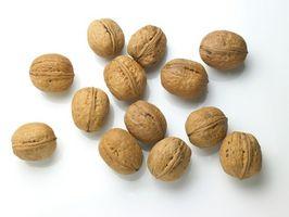 Hvordan bruke Valnøtter å senke kolesterolet
