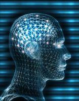 Hva er handlingen av dopamin i kroppen?