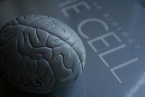 Vitaminer som hjelper bedre hukommelse