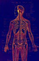 Ammoniakk og leverskader