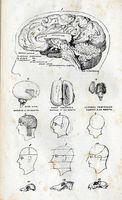 Neuromodulation Technique
