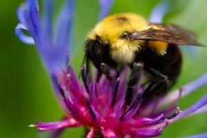 Hvordan bli kvitt en Insect Sting