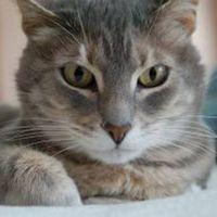 Hva er meningen med Cat Scratch Fever?