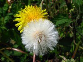 Herbal kilder til kalsium