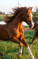 Hvordan å ri en hest Etter Hip Replacement