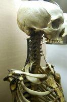 Sykdommer i Skeleton