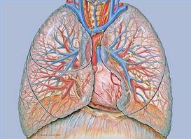 Om punktert Lunger