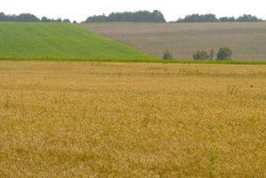 Hva er farene ved GMO?