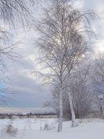 Survival Foods å spise i vinter for å holde varmen
