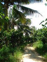 Medisin Tropical Plants