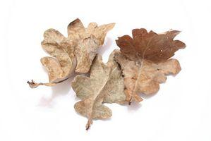 Hvordan stoppe Poison Oak