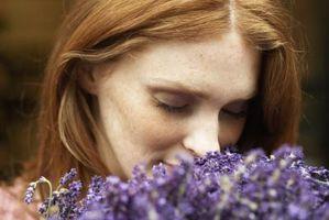 De østrogen effekt av Lavender Oil