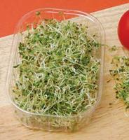 Alfalfa & Tang Helse Fordeler