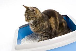 Menneske helsemessige problemer med kattesand Bokser
