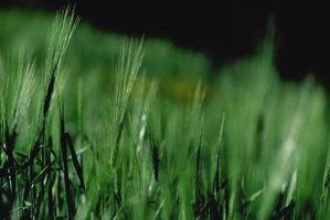 Hva Foods har grønne Barley pulver i dem?