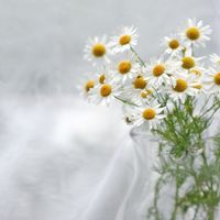 Generell informasjon om medisinplanter
