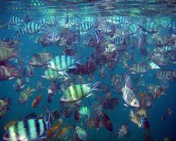 Fiskeolje Informasjon Positivt og ulemper
