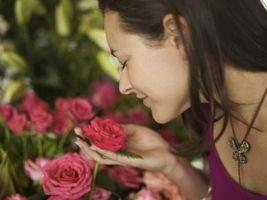Medisinske verdien av Rose Planter