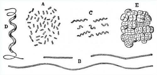 Hva er forskjellige typer bakterier?