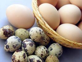 Hvordan kjøpe egg