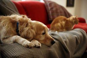 Sykdommer du kan få fra hunder og katter