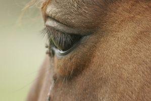 Typer av Viral Eye Infeksjon