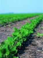 Pros av genmodifiserte avlinger