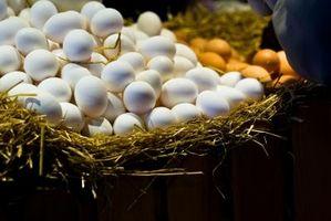 spise rått egg