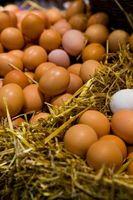 Forskjellen mellom den hvite og gule Deler av en Egg