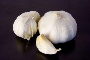 De beste hvitløk kosttilskudd med No Hvitløk Lukt