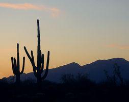 Juvenile boot camp i Phoenix