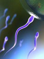 hvordan du gjor en sperm count.