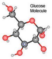 Hva Styrer trinnene i respirasjon av glukose