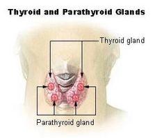 Hyperaktive Thyroid Symptomer