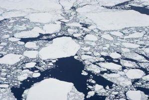 Effektene av global oppvarming på Bodies
