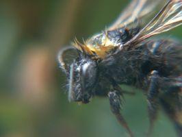 Liste over giftige insekter