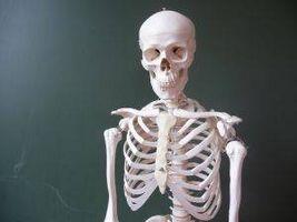 Hvordan Forstå Skeletal System