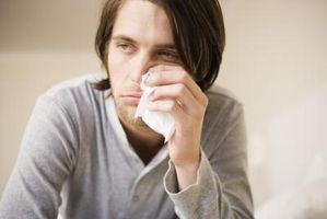 Safflor Allergi